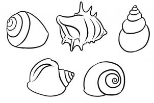 Drawn shell queen conch How Step  Pop Culture
