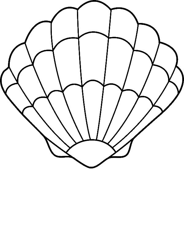 Drawn shell scallop shell By More 25+ art Pinterest