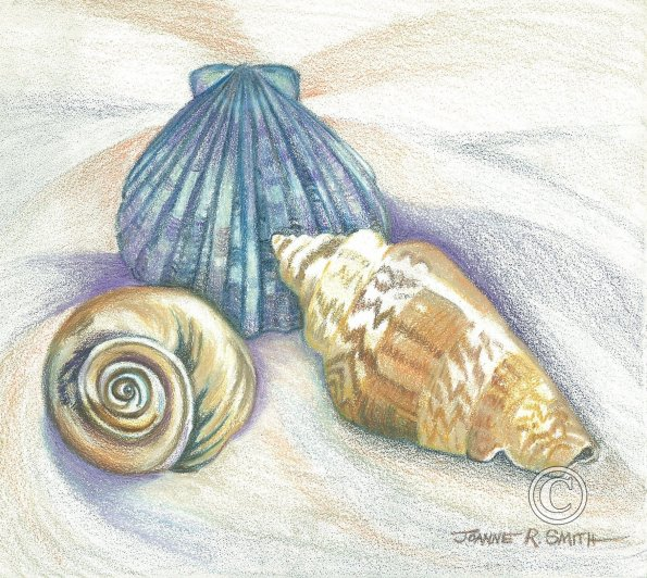 Drawn sea life seashell Pencil Shells shell Colored Colored