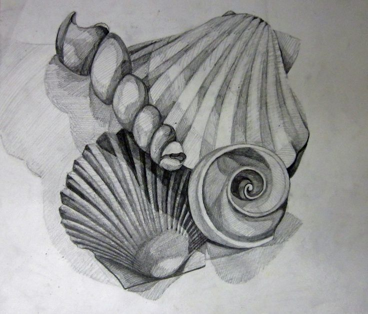 Drawn shell shaded To Find 148 on draw