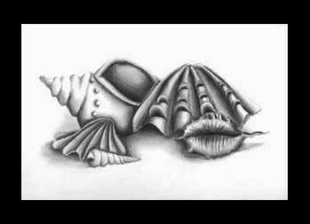 Drawn shell shaded Natalie Shell Stilllife S V