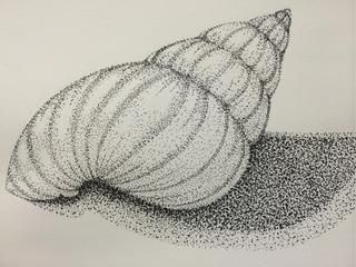 Drawn shell shaded Or While lights low best