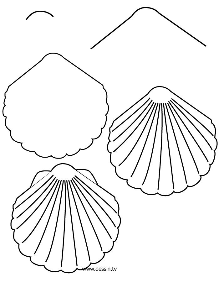 Drawn shell simple With  how simple step