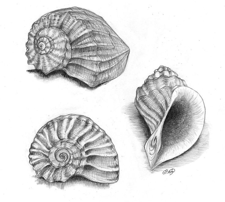 Drawn sea life seashell Best on of Pinterest Search
