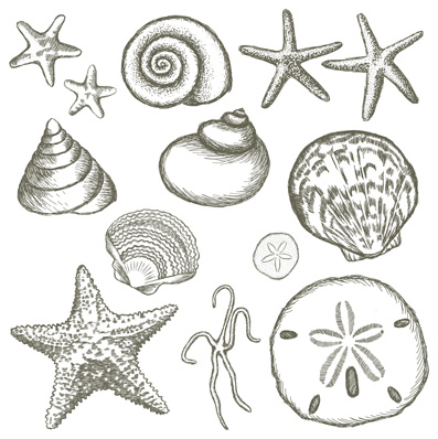 Drawn shell starfish Illustrations is nice nice Pinterest