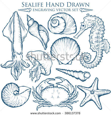 Drawn sea life nature Starfish wild set aquatic sea