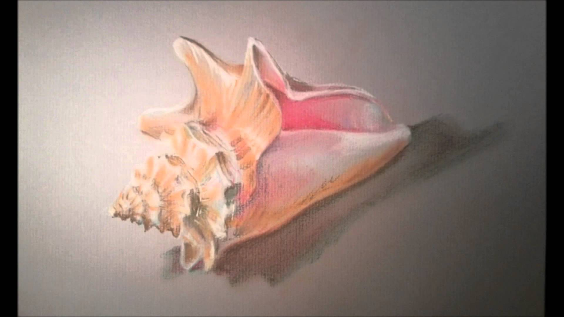 Drawn shell still life Art Poynter Shells Art Pastel