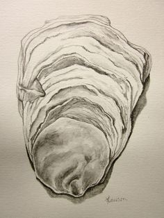 Drawn shell still life Illustration@Science shell drawing original pencil