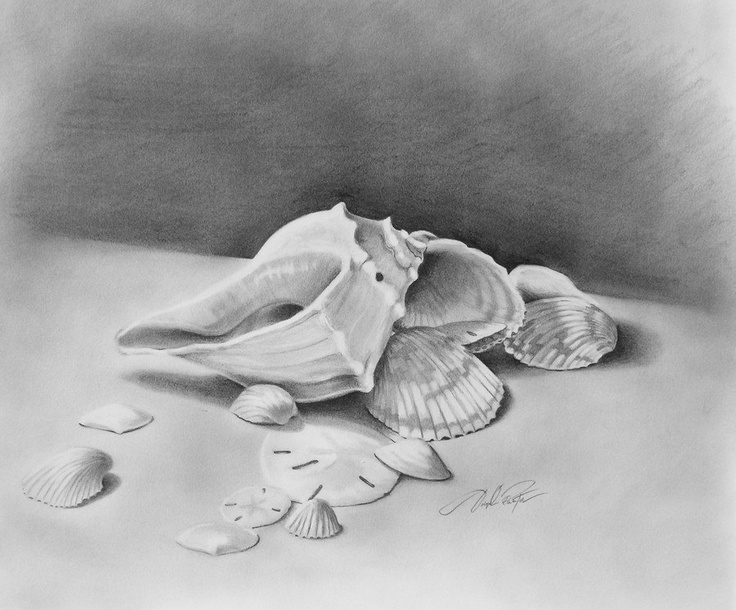 Drawn shell still life Pinterest of Google sea shells