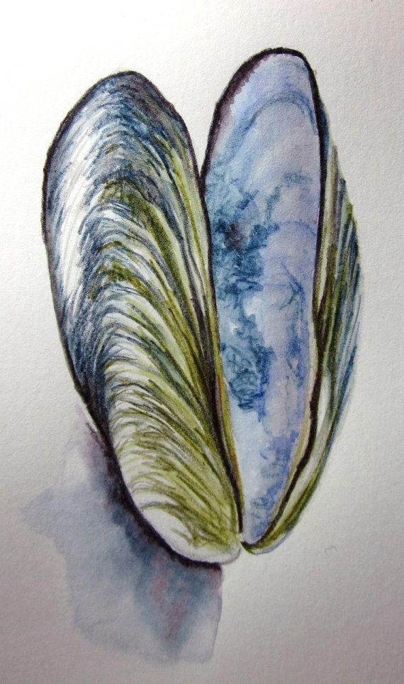 Drawn shell still life Ideas shell pencil original watercolour