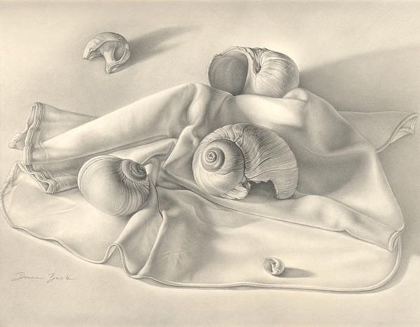 Drawn shell still life Pinterest Snail 158 Still Life