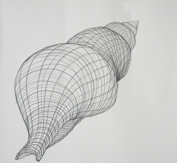 Drawn shell still life 2 Cross jpg Contour 2