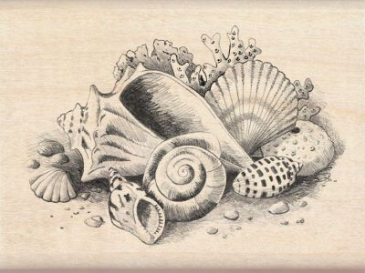 Drawn shell still life Pinterest I'm decorate cover plain