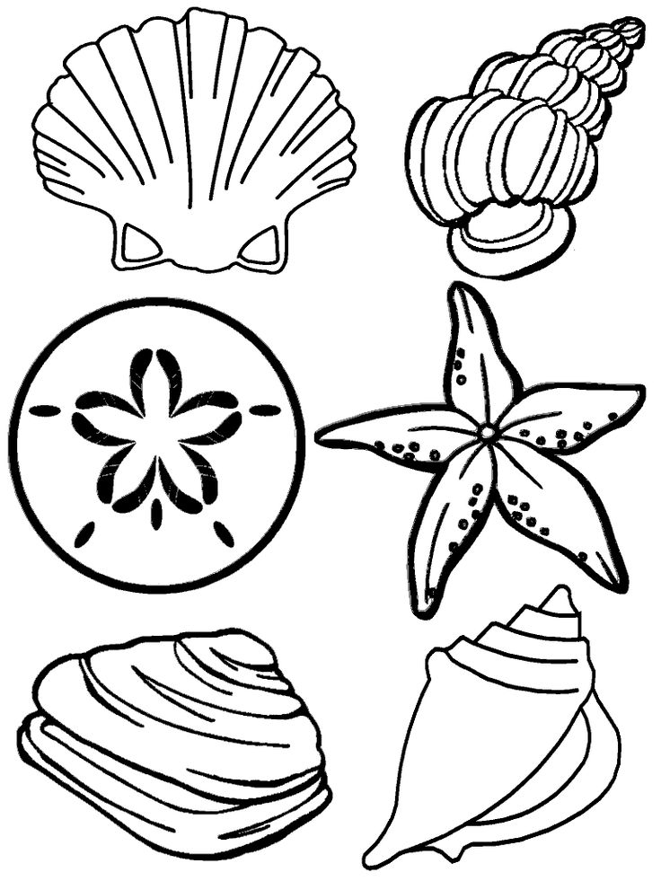Drawn shell themed Related Beach Ideas Seashell images