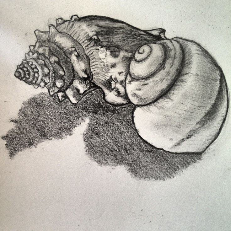 Drawn shell tonal 52 images Pinterest about drawing