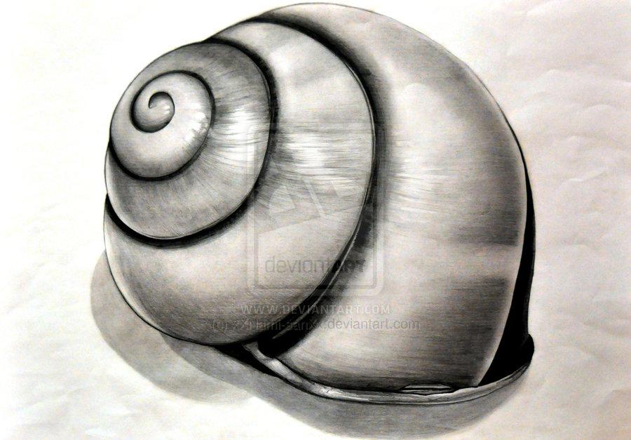 Drawn shell tonal Ms Kays Organic  World
