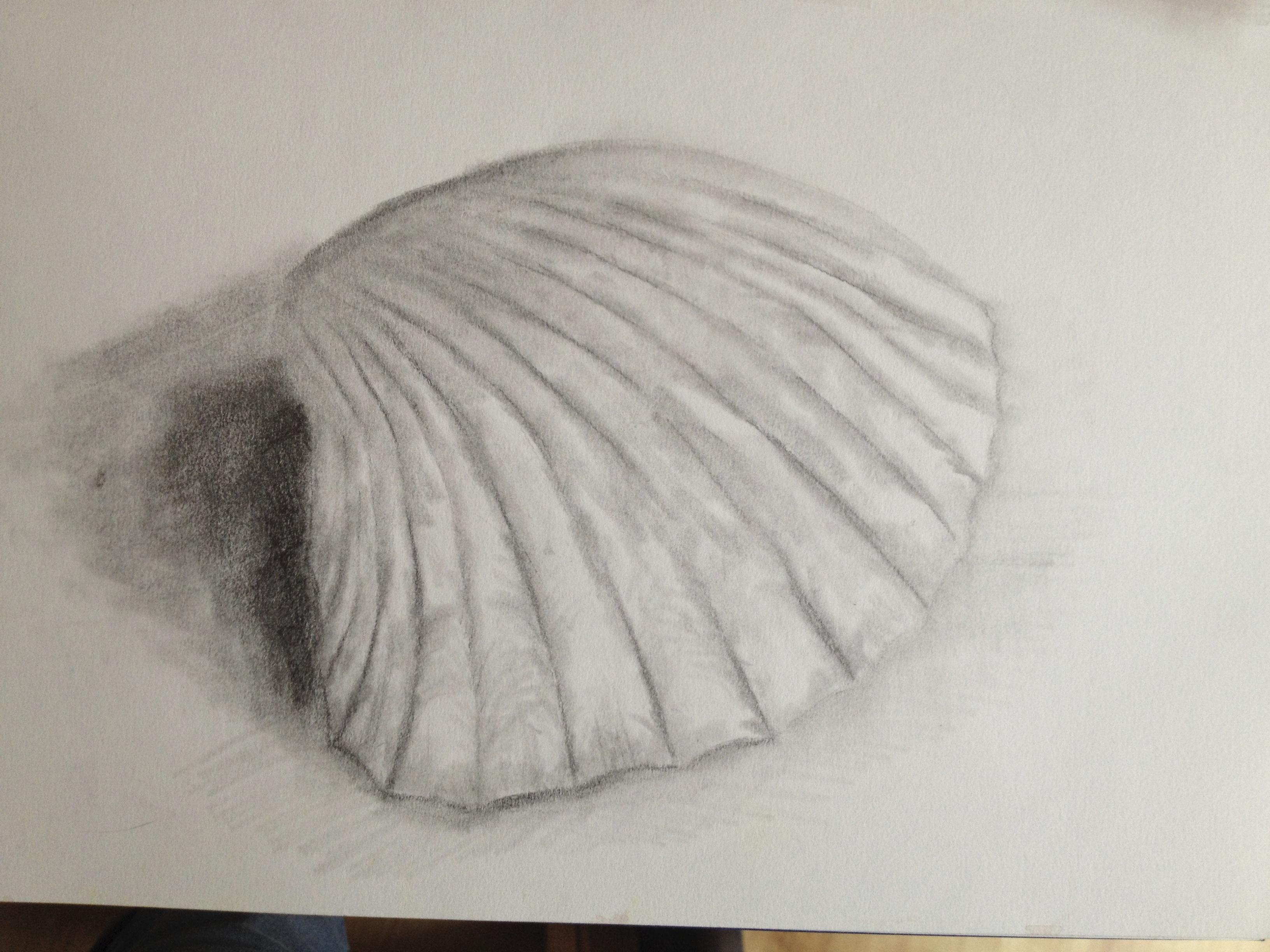 Drawn shell tonal Drawing and 4B Skills drawing