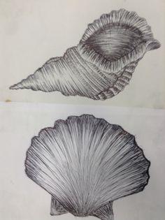 Drawn shell tonal II print drawings Shell Shell