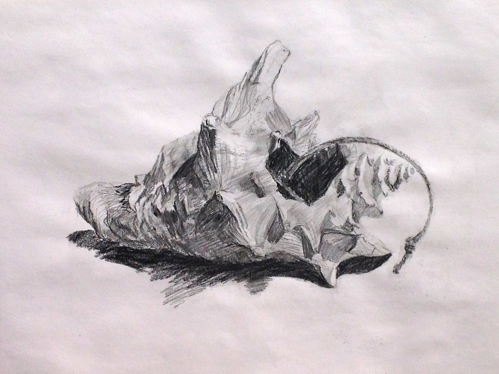 Drawn shell tonal Shell and and Exercise mytexturedworld: