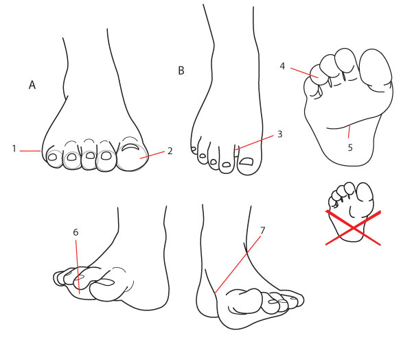 Drawn shoe front view Foot Details seen frontally Fundamentals: