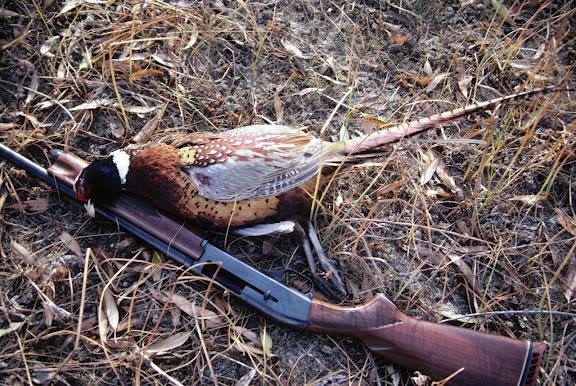 Drawn shotgun bird hunting  Fish Upland neck of