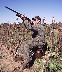Drawn shotgun bird hunting On Dove Tips Loads and