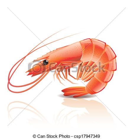 Drawn shrimp Drawing Google Search Google