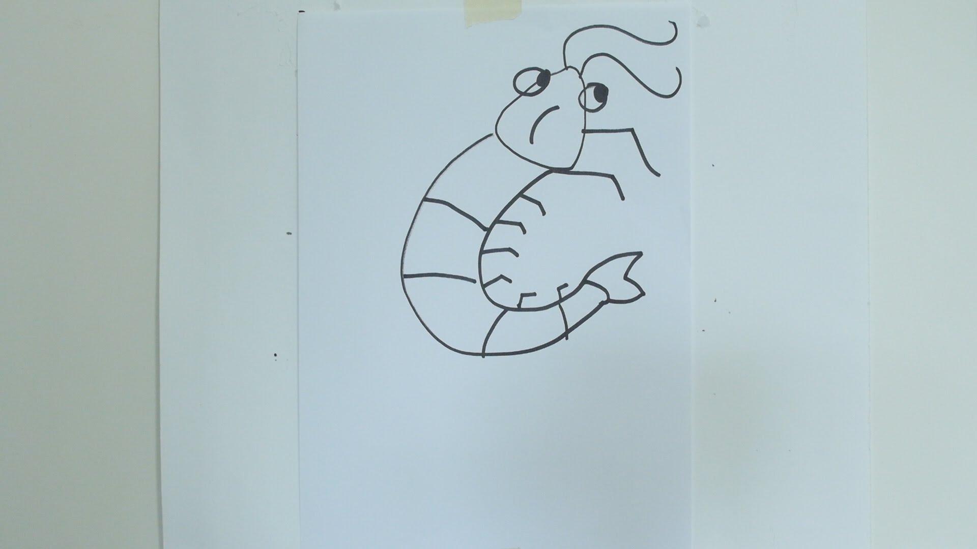 Drawn shrimp Prawn YouTube How prawn How