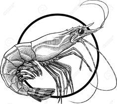 Drawn shrimp Sea animals Shrimp a Prawn