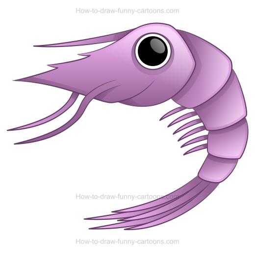 Drawn shrimp Using cartoon How to A