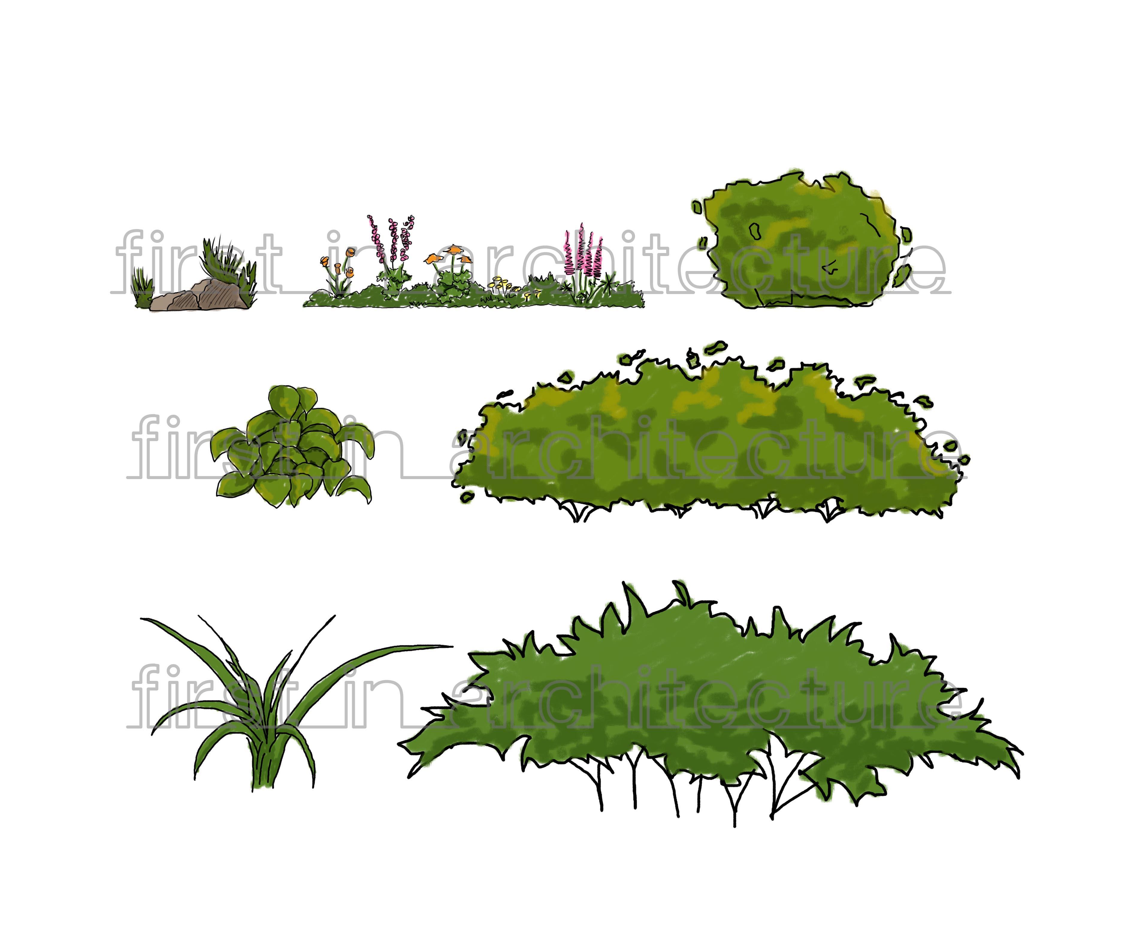 Drawn shrub Everything Design plants shrubs &