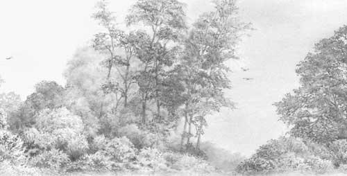 Drawn shrub Line » 'Vanished!' Weimaraner Trees