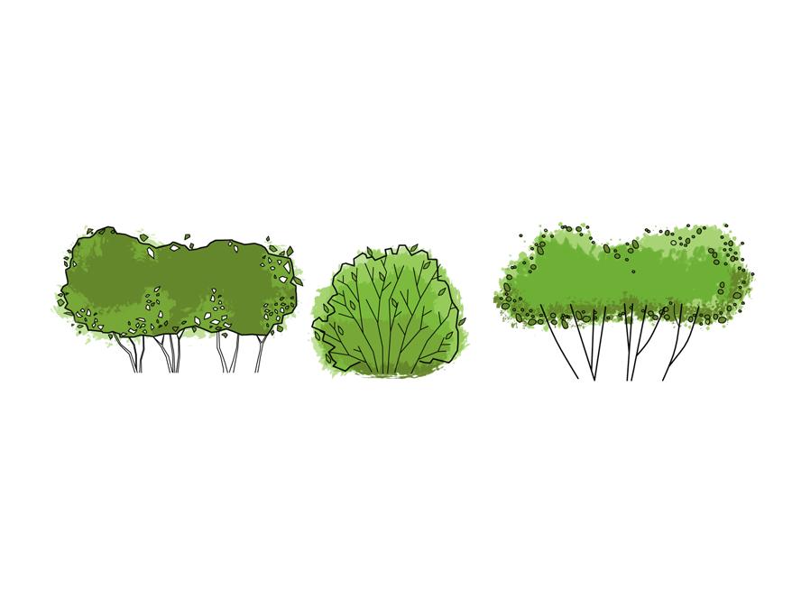 Drawn shrub Graphic Landscape 3 Shrubs Support