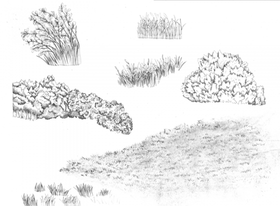 Drawn bush easy Image to Image to How