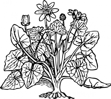 Plant clipart outline Bush  Art clipart domain