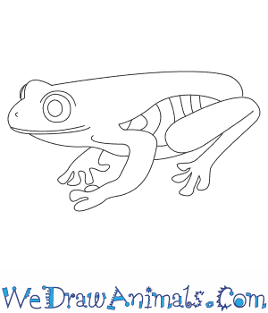 Red Eyed Tree Frog clipart realistic #2