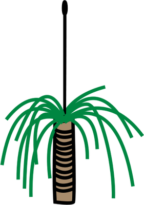 Shrub clipart grass Xanthorrhoea of Illustration Tree Xanthorrhoea