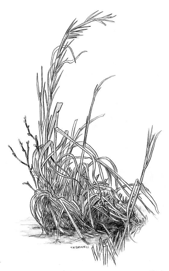Drawn bush grass Plants Draw Trees Rocks to