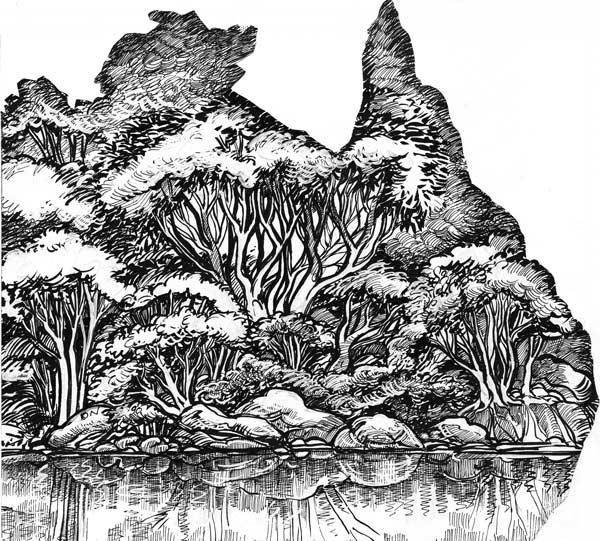 Drawn bush nature Draw DrawingAustralia · How Drawing