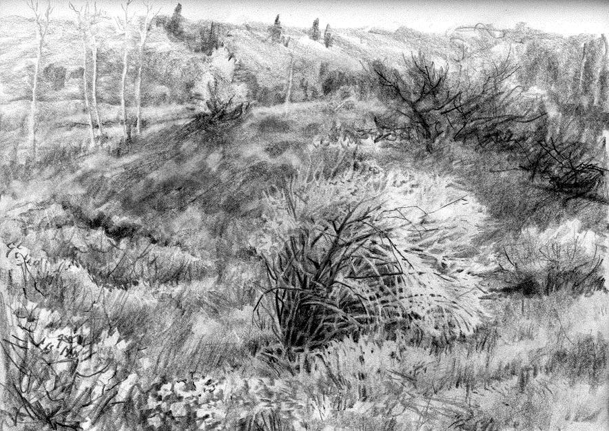Drawn bush scenery  Search draw how draw