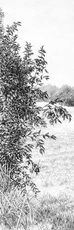 Drawn bush realistic Drawing Blog Life Drawing Archive