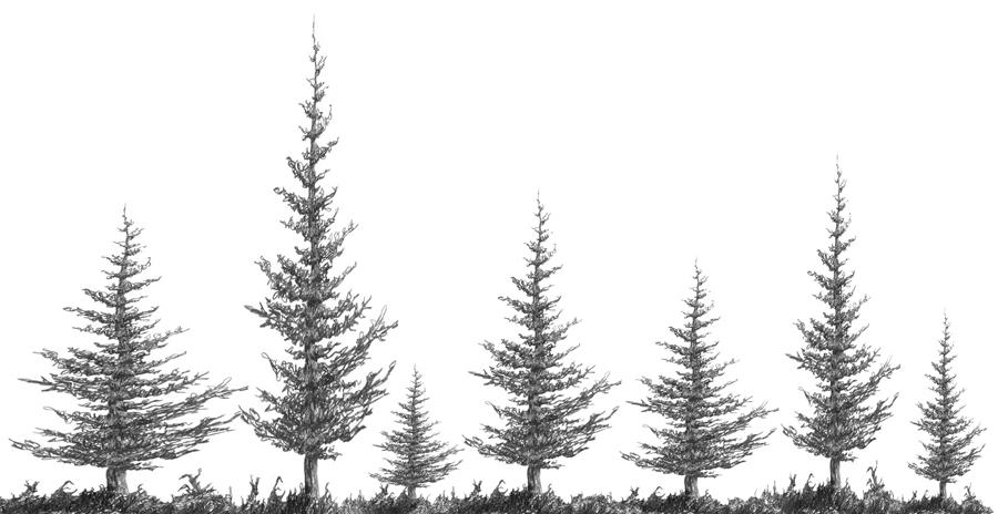 Drawn fir tree easy Figure a Realistic Squirkle 1