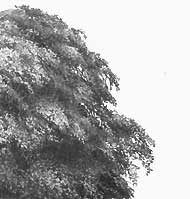 Drawn bush realistic Techniques hints TREES tips Drawing