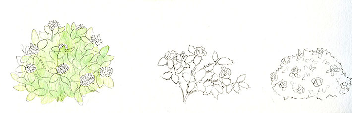 Drawn bush easy Paint Drawing to Detailed Shrubbery