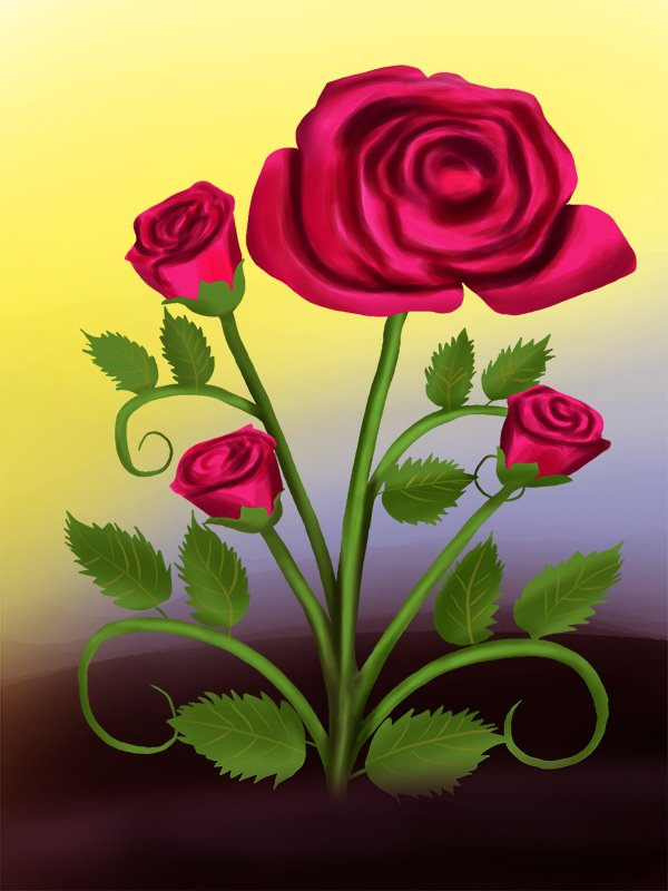Drawn rose bush one Plant (Rose) Draw a to