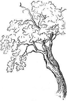 Drawn shrub step by step Google How Trees to Plants