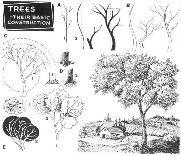 Drawn shrub step by step Twigs Step Draw 03 to