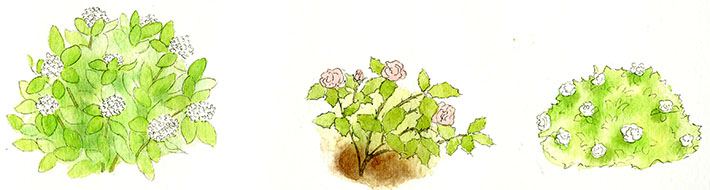 Drawn shrub step by step And Step 3 How in
