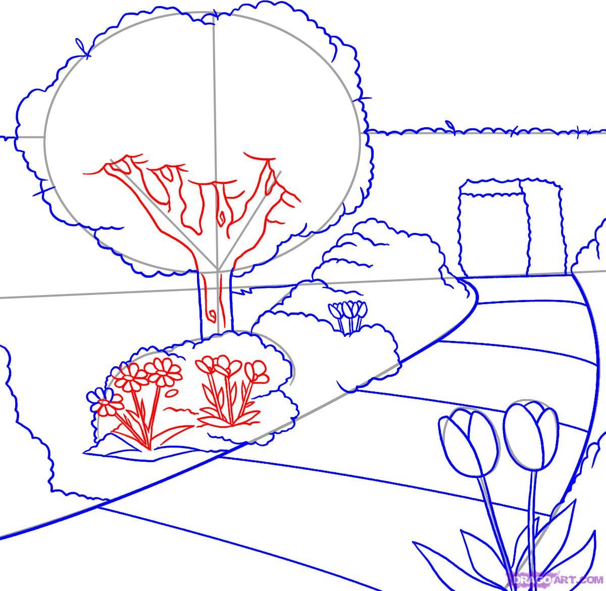 Drawn shrub step by step Draw how & to step