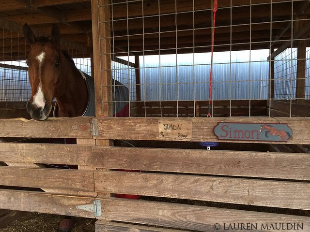 Drawn sign horse stall DIY Stall 11284144993_b4bf6aa90f_z Texas Moved